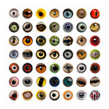 Изолированный состав глаз животного, Стоковое Изображение