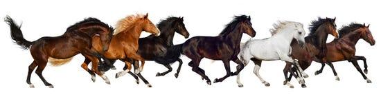 Изолированный табун лошади стоковые фото