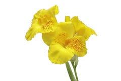 Изолированный цветок Стоковое Изображение RF