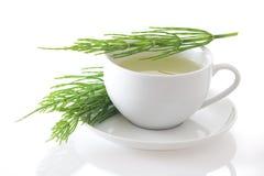 Изолированный чай horsetail поля (arvense рода сосудистых растений) Стоковые Изображения