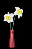 2 изолированных narcissus и вазы Стоковое Фото