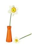 2 изолированных narcissus и вазы Стоковые Фотографии RF