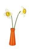 2 изолированных narcissus и вазы Стоковая Фотография RF