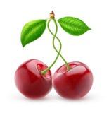 2 изолировали сладостные вишни с переплетаннсяыми стержнями Стоковые Фотографии RF