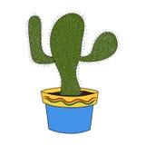 Изолят кактуса Стоковое фото RF