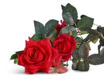 Изолят красной розы пластичный на белой предпосылке сделанной от пластмассы Стоковые Изображения