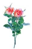 Изолят розы пинка Стоковые Изображения