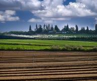 израильское село varburg sde стоковые фото