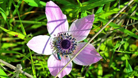 Израильские цветки весной Стоковые Фото