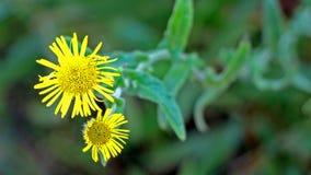 Израильские цветки весной Стоковое Фото