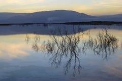 Израиль мертвое море рассвет Стоковые Фото