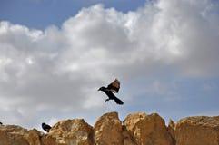Израиль, птицы на утесах Стоковое Изображение