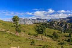 Изрезанная окружающая среда в швейцарском национальном парке стоковое фото rf