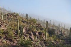 Изрезанный ландшафт национального парка Saguaro Стоковая Фотография RF