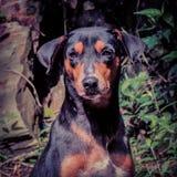 Изуверская собака Стоковые Изображения