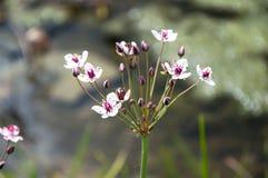 Изумительная красочная природа предпосылки лета цветка Стоковая Фотография
