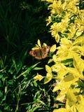 Изумительная съемка бабочки в утре Стоковая Фотография