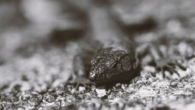 Изумительное фото ящерицы крупного плана Стоковое фото RF