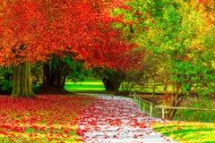 Изумительные золотые цвета осени в следе пути леса таблица сквош собрания осени цветастая Стоковые Фотографии RF
