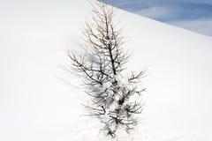 Изумительный взгляд дерева и снега покрыл ландшафт в горных вершинах Швейцарии Стоковое Изображение RF