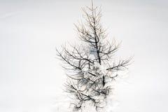Изумительный взгляд дерева и снега покрыл ландшафт в горных вершинах Швейцарии Стоковое Изображение