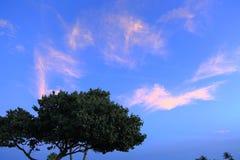 Изумительный взгляд зеленых деревьев на небе и белизне ночи голубом заволакивает предпосылка цветасто Остров Аруба Стоковые Изображения RF