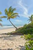 Изумительный взгляд пляжей около Itacare Стоковая Фотография RF