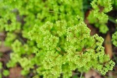 Изумительный зеленый цвет весны Стоковые Фото