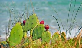 изумительный красный цвет кактуса цветений пляжа Стоковое фото RF