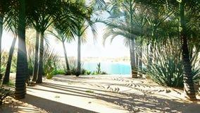 Изумительный оазис в пустыне Ясный день Далекие горы, песчанные дюны, пальмы и знойное небо сток-видео