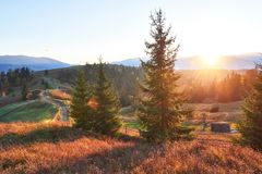Изумительный пейзаж утра осени в горах с лугом и красочных деревьях на переднем плане и тумане под ногами национально стоковые изображения rf