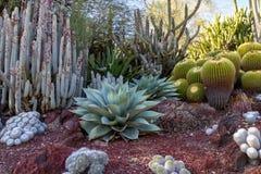 Изумительный сад кактуса пустыни с множественными типами кактуса Стоковая Фотография RF