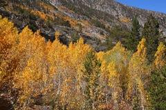 изумительн древесины осени красивейшие стоковое фото