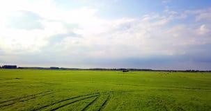 Изумительная воздушная кинематографическая съемка в зеленом поле видеоматериал