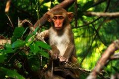 Изумительная обезьяна Стоковая Фотография RF
