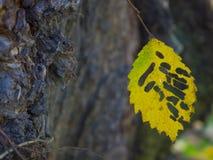 Изумительная предпосылка скелета лист Стоковая Фотография RF