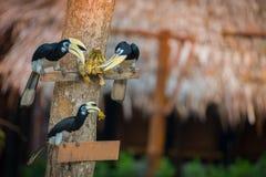 Изумительная птица есть feeded банан стоковое изображение