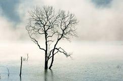 Изумительная сцена, природа с сухим деревом, озером, туманом Стоковое Изображение
