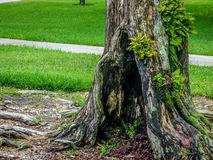Изумительное дерево в парке Стоковое Изображение RF