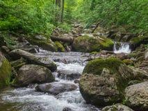 Изумительное река в глубоком ландшафте леса Стоковая Фотография
