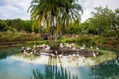Изумительное стадо фламинго Стоковые Фотографии RF