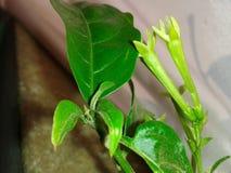 Изумительные листья зеленого цвета Стоковые Изображения RF