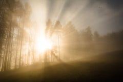 Изумительные sunrays весны Стоковое Изображение RF