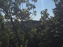 Изумительный взгляд изнутри глубокого леса Стоковая Фотография RF