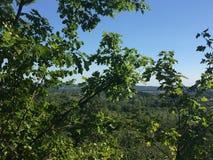 Изумительный взгляд изнутри глубокого леса Стоковое фото RF