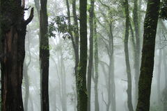 изумительный лес Стоковое фото RF