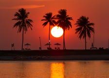 Изумительный заход солнца пляжа с кокосовой пальмой около лагуны Стоковые Фотографии RF