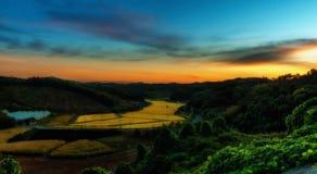 Изумительный одичалый взгляд природы и плантация соединения Стоковые Фото