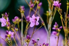 Изумительный рододендрон цветения против предпосылки голубые облака field wispy неба природы зеленого цвета травы белое стоковые фотографии rf