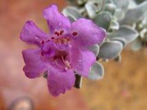 Изумительный цветок после дождя Стоковые Изображения